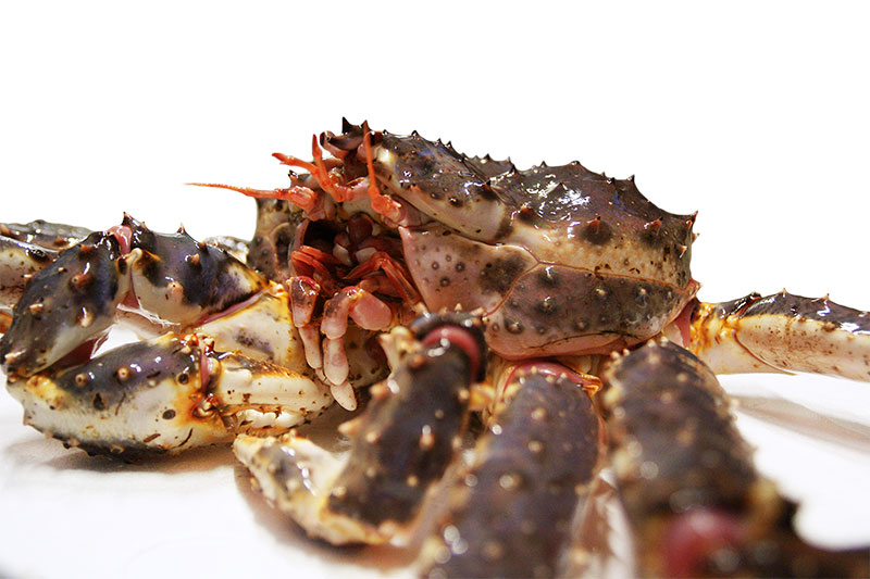 Inka As H84 Our Products Live Norwegian King Crab